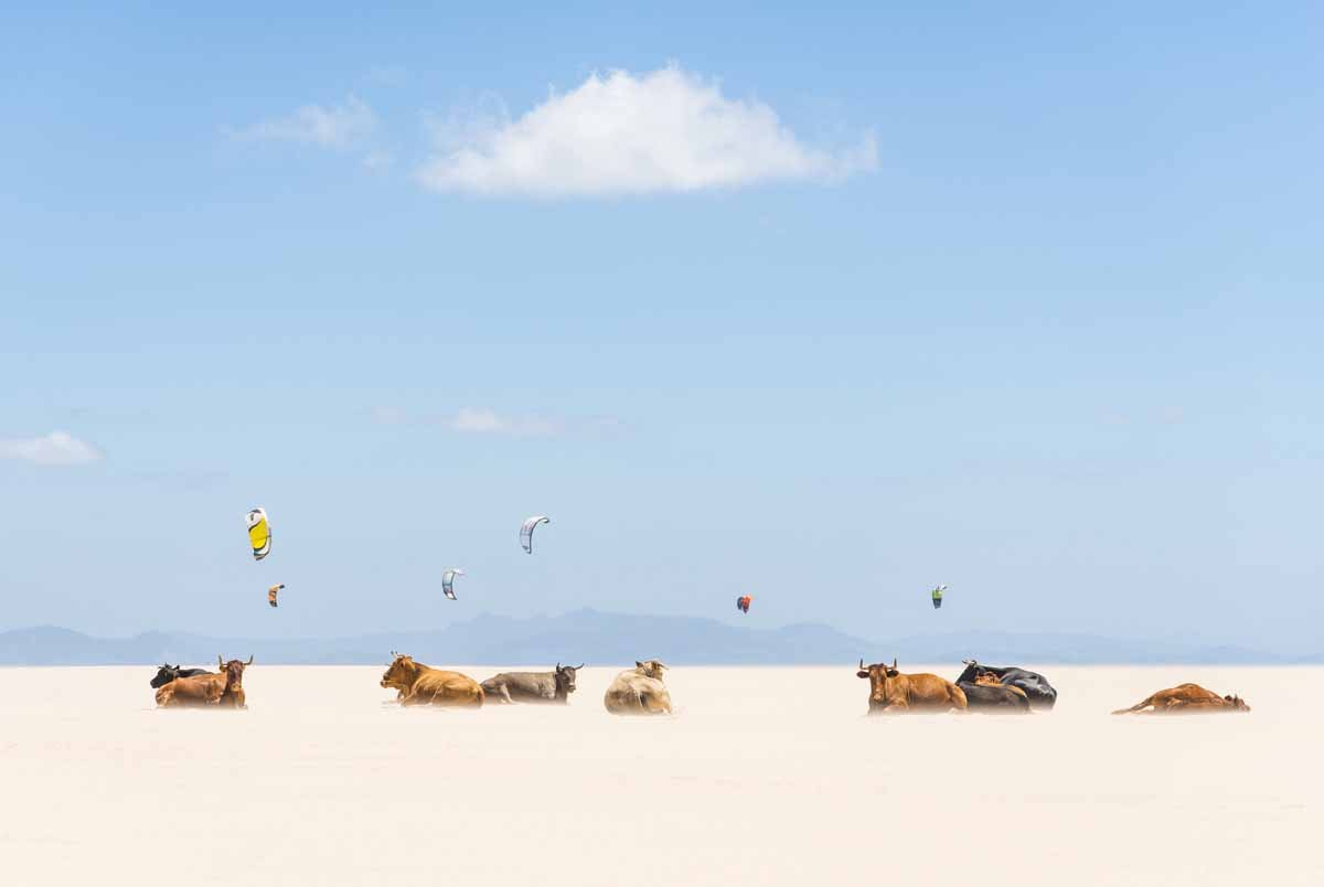 "Andrew Lever, ""Cows and Kites"""